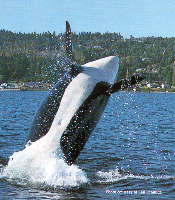 whalejumping