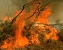 fire debris