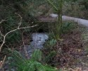 padden creek 2