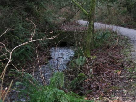Milky water in Padden Creek still a mystery