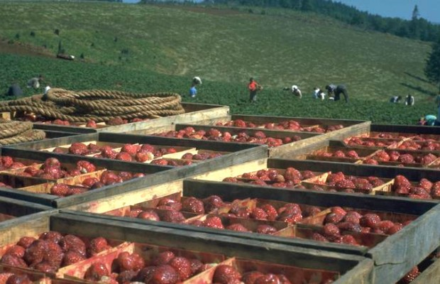 Negotiations break down again at Sakuma Brothers Farm