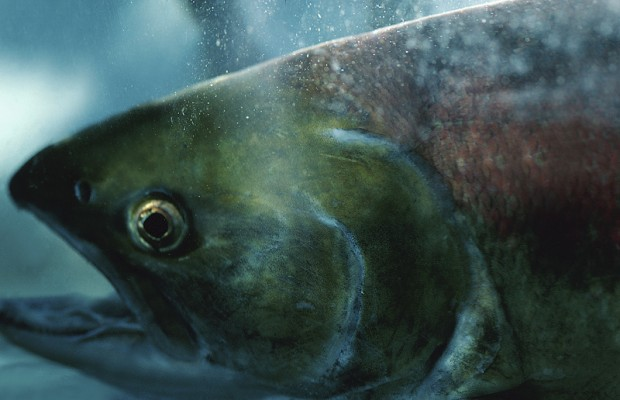 Fishing communities worry more coal means fewer fish