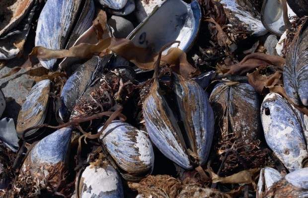 Shellfish harvesting closed by life threatening poison