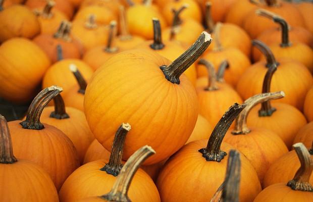 Pumpkin Pitch set for tomorrow in Burlington