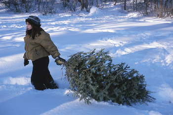 Christmas Tree Permits For Mt. Baker-Snoqualmie Forest