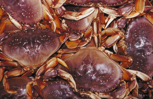 Fishermen caught in crab ring scheme