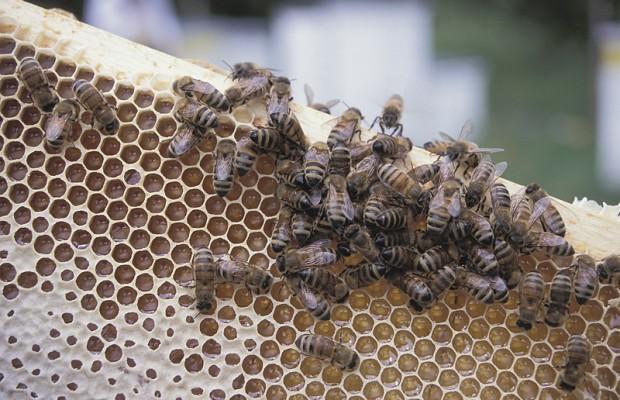 Beekeeper pleads guilty to bee theft