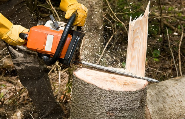 Moratorium on logging in slide-prone areas sought