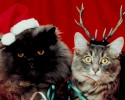 cats christmas
