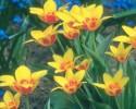 generic perennial flower