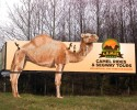 Radio Real Estate Camel-SB-Mockup-4