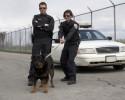 generic police dog