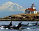whalesmtbakerlighthouse - cropped