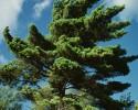 windy tree