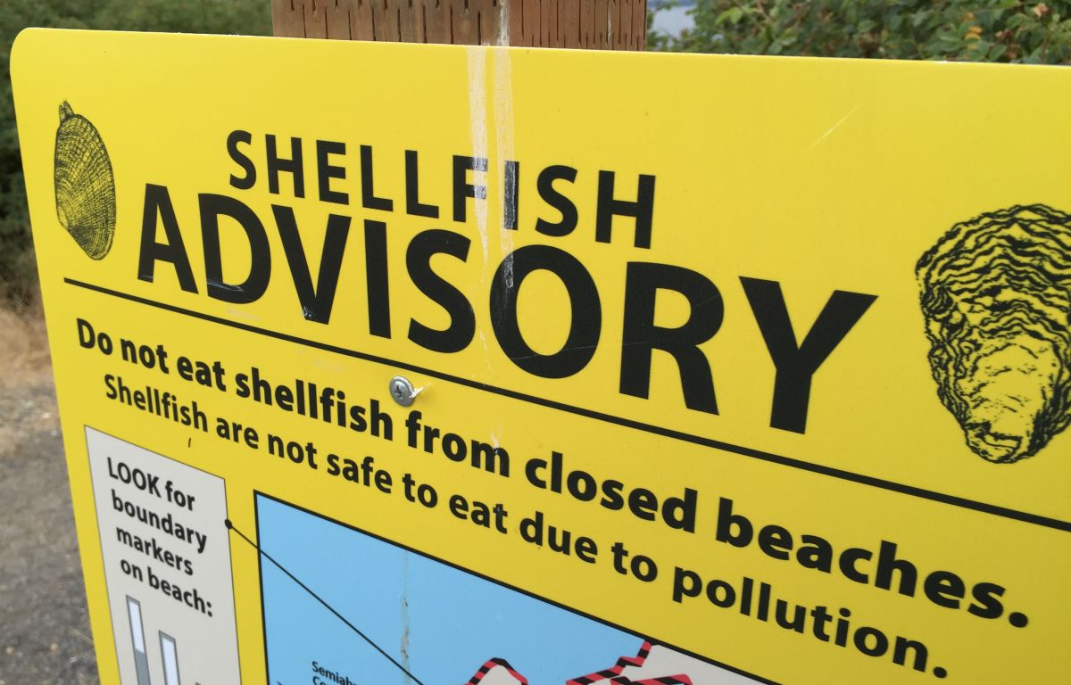 Biotoxin levels force northern Whatcom County shellfish closure | 790 KGMI
